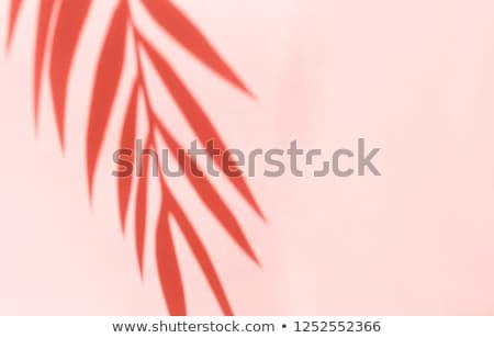 closeup view of coral at beach as summer vacation background stock photo © vapi