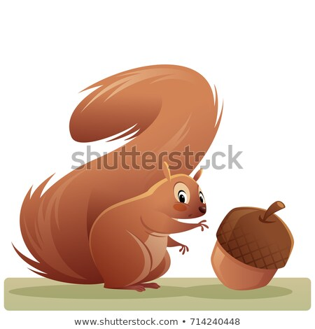 Cute Squirrel Acorn Isolated Stock photo © Lightsource