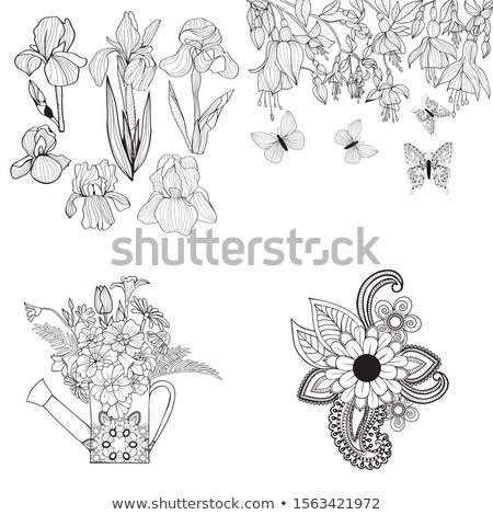 Ayarlamak örnek iris çiçekler vektör Stok fotoğraf © Margolana