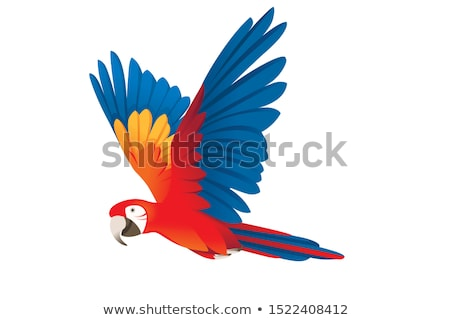 Bright colorful flying parrot, cartoon animal on white Stock photo © evgeny89