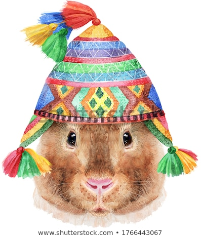 Watercolor portrait of Teddy guinea pig in chullo hat on white background Stock photo © Natalia_1947