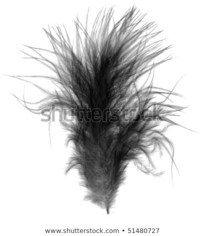 Black Single Soft Downy Bird Feather Quill Over White Stok fotoğraf © Sherjaca
