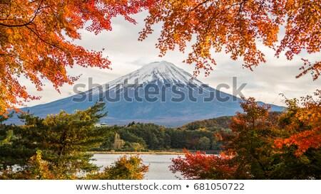 Fuji spadek Mount Fuji dziedzinie trawy Zdjęcia stock © craig
