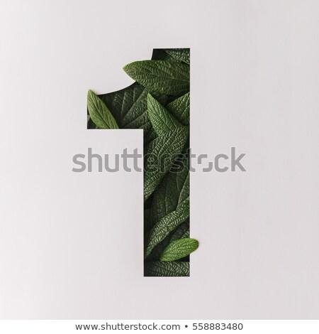 Egy zöld levél izolált fehér közelkép stúdió Stock fotó © boroda