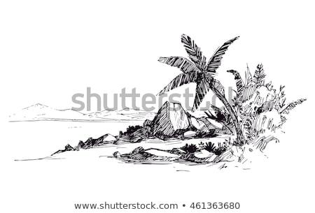 deserto · ilustração · palms · verão · natureza - foto stock © julvil