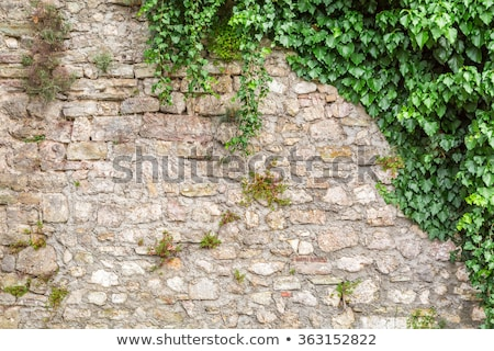 Texture of old stone wall and green plants Stock photo © vlad_star