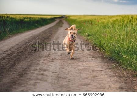 run-down road in rural landscape Stock photo © gewoldi