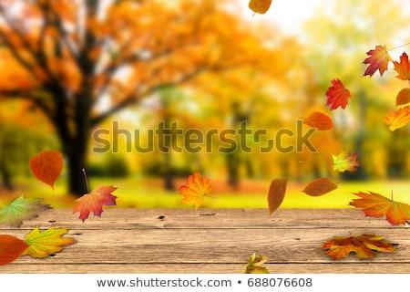Coloré jardin automne temps paysage vert Photo stock © linfernum