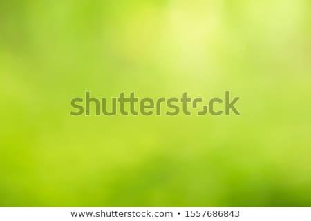 green background with grass Stock photo © koca777