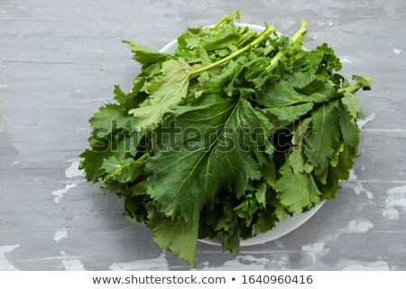 Turnip greens Stock photo © joker