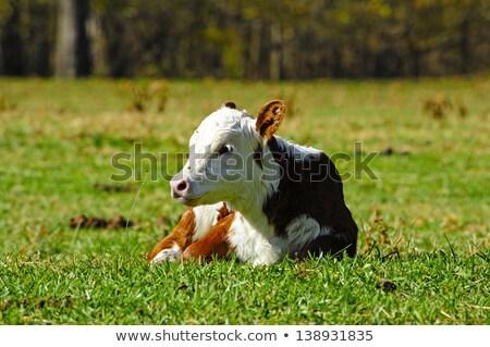 Genç küçük çalı çiftlik doğa Stok fotoğraf © rhamm