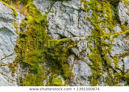 A Detailed Close Up of the Face of a Boulder Stock photo © anshar