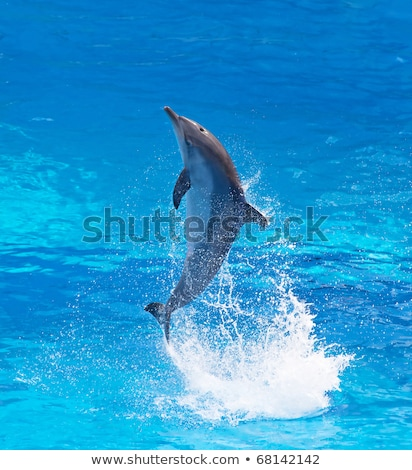 Dolphins jumping high from blue water Stock photo © kawing921
