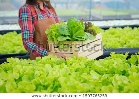 トラクター · フィールド · 農家 · 作業 · 草 · 自然 - ストックフォト © guffoto