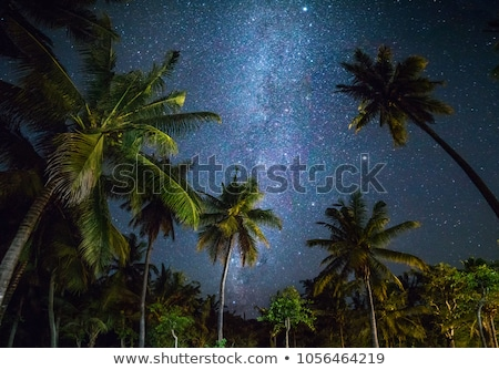 starry night on tropical resort stock photo © anna_om