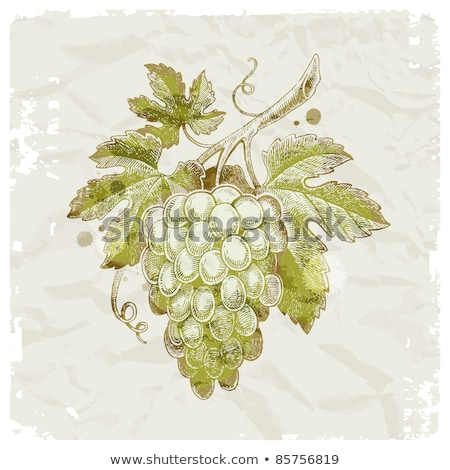vintage frame with cluster grapes and green leaf Stock photo © LoopAll