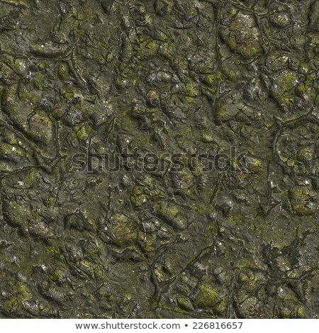 wizened swamp soil with small stones stock photo © tashatuvango