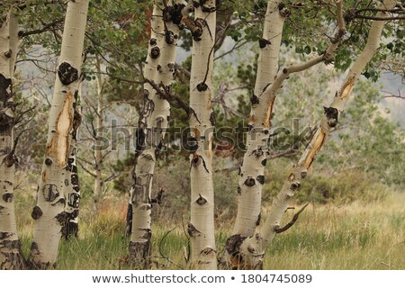 foresta · suolo · senza · soluzione · di · continuità · texture · erba · primavera - foto d'archivio © tashatuvango