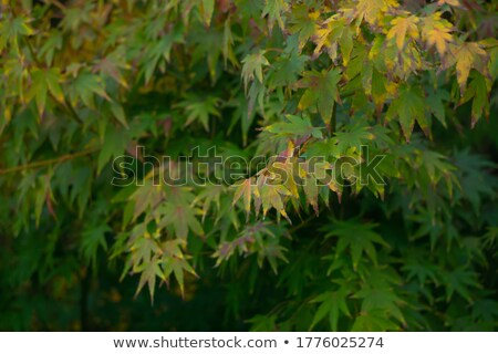 fresh green maple leaf full frame texture stock photo © ozgur