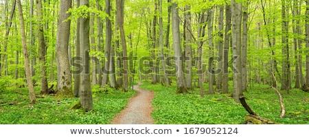 Orman bahar ağaç güneş doğa Stok fotoğraf © Arrxxx