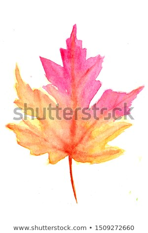autumn leave maple isolated on white background Stock photo © ozaiachin
