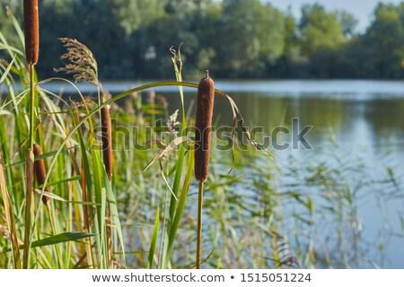 zöld · tó · kék · tavasz · nyár · folyó - stock fotó © Sportactive