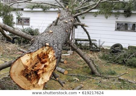 spart · copac · apă · pădure · natură · peisaj - imagine de stoc © olandsfokus