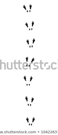Lábnyom mókus illusztráció fa természet felirat Stock fotó © adrenalina