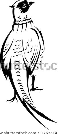リング 首 実行 自然 鳥 色 ストックフォト © pictureguy