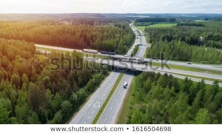 森林 フィンランド 夏 風景 木 公園 ストックフォト © Juhku