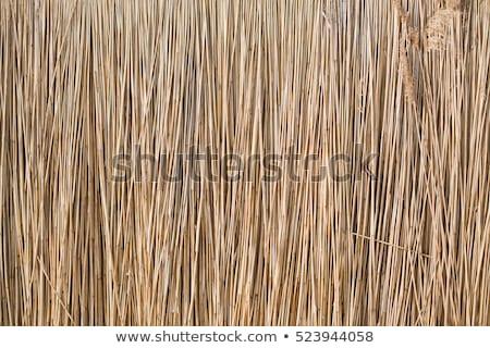 szalmaszál · textúra · fű · háttér · padló · növény - stock fotó © stevanovicigor