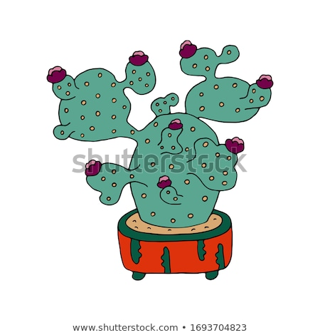 quadro · cacto · areia · planta · tropical · desenho - foto stock © vectorworks51