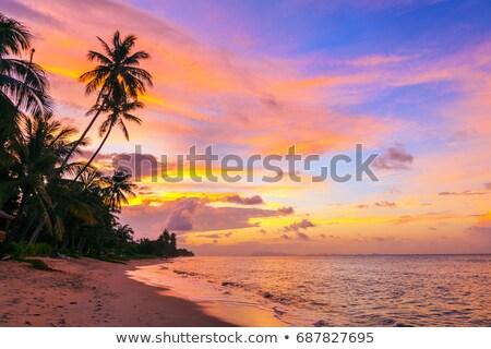 Kokosnoot strand zonsondergang hemel natuur zee Stockfoto © Boophuket