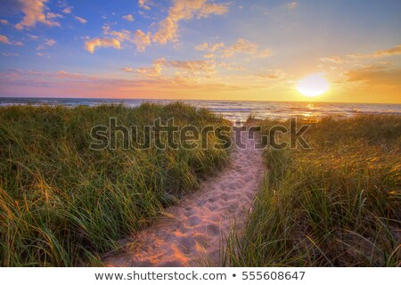 Sandy path to the beach at dawn sunrise Stock photo © lovleah