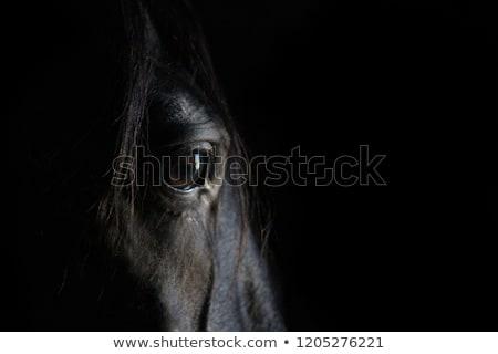 Konia portret stado niebo oka trawy Zdjęcia stock © joyr