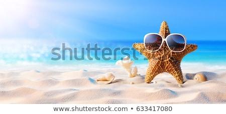 Denizyıldızı güneş gözlüğü örnek doğa deniz yaz Stok fotoğraf © adrenalina