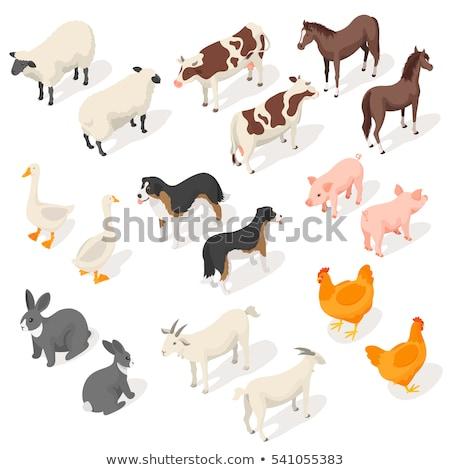 Izometrikus 3D vektor szett farm állatok hát Stock fotó © curiosity