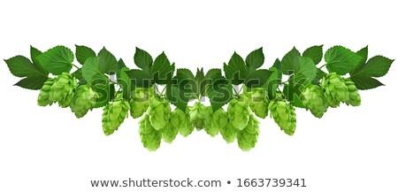 hops herb plant stock photo © frescomovie