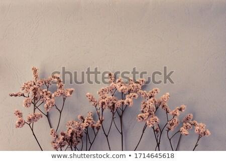 Stockfoto: Groeiend · groot · handen · spruit · abstract · groene