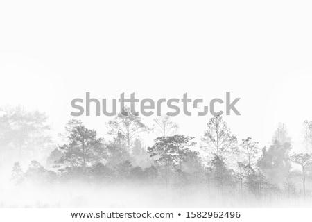 Nebuloso cenário árvores árvore madeira pôr do sol Foto stock © Pozn