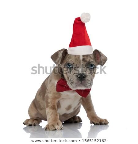 Gentleman · tragen · hat · liebenswert · glücklich - stock foto © feedough