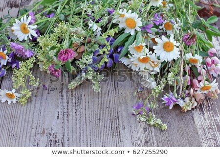 Hermosa ramo flores silvestres manos nina mujer Foto stock © ruslanshramko
