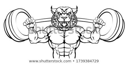 Wilde kat mascotte gewichtheffen lichaam bouwer dier Stockfoto © Krisdog