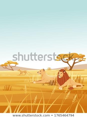 Stock photo: Family of lions - flat design style illustration