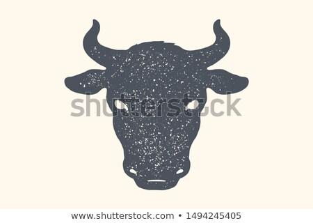 Krowy byka vintage retro wydruku plakat Zdjęcia stock © FoxysGraphic