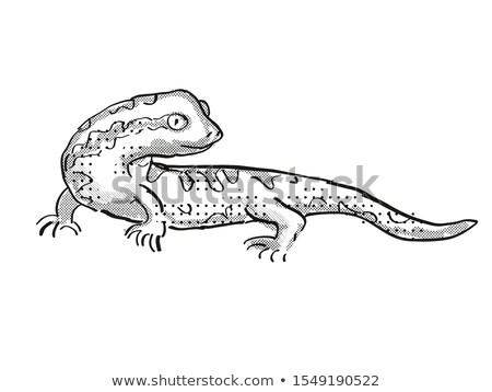 Gekkó Új-Zéland vadvilág rajz retro rajz Stock fotó © patrimonio