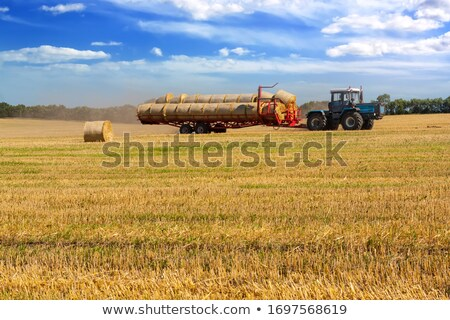 農家 フィールド 小麦 午前 肖像 草 ストックフォト © nomadsoul1