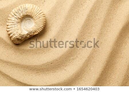 Zee zand top golf shell Stockfoto © ThreeArt