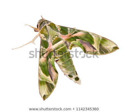 Colorful moth mimicry Stock photo © Ansonstock