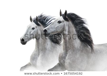 two horses portrait stock photo © goce